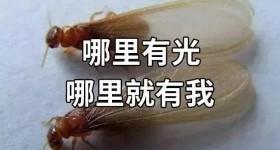如何应对白蚁?