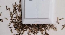 雨后白蚁出没,屋主该怎么做?您需要这份房屋白蚁指南!