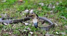 【识虫③】:蛇类