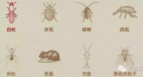 【鼠虫害】防治服务