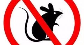 灭鼠做得好,远离疾病无烦恼